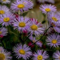 цветочный коврик :: gribushko грибушко Николай