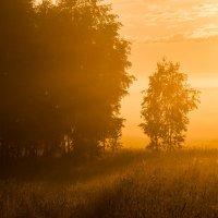 туман окутывает :: Олег