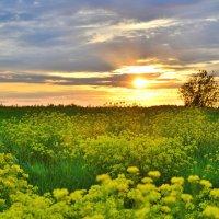 Сила сибирского лета :: Андрей Беспалов