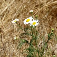Жаркий месяц июнь... :: Тамара (st.tamara)