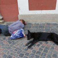 Безмятежность или дневной сон без обеда :: Святец Вячеслав