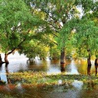 Разлив на реке :: Владимир Зыбин