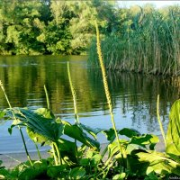 На берегу реки :: °•●Елена●•° Аникина♀