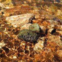 Где золото моют в ручьях.. :: Андрей Заломленков