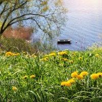 Весенние цветы :: Юлия Батурина