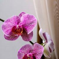Орхидея :: Elena Ereshenko