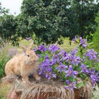 Кролик Ричи :: оксана косатенко