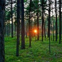 вечером в лесу :: Валентина Папилова