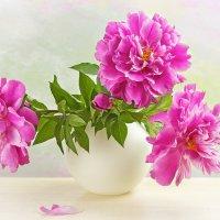 Пионы в белой вазе :: Светлана Л.