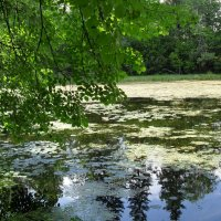 Барский пруд :: Надежда