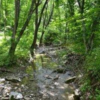 Речка в лесу :: Виктор Шандыбин