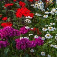Цвет лета :: Игорь Чубаров