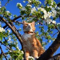 Коты прилетели 1 :: Татьяна Евдокимова