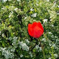 городские цветы,из первых :: Олег Лукьянов