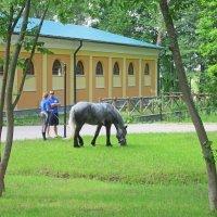 И кони хотят кушать... :: Михаил Попов