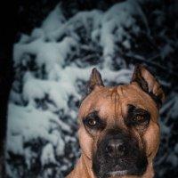 Мой любимый пес :: Елена Максимова