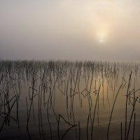 Туманное утро :: Владимир Брагилевский