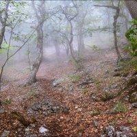 Утренний лес. :: Александр Л......
