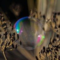 Про мыльные пузыри :: Надежда Чернецкая