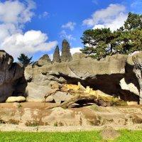 Вольер со львами в гамбургском зоопарке :: Денис Кораблёв