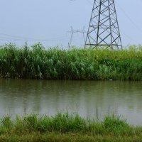 Дождь на рыбалке. :: Береславская Елена
