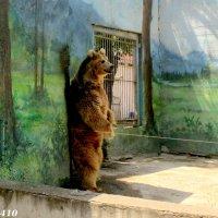 Медведю жарко... :: Нина Бутко