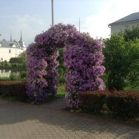 Цветочная арка :: Natalia Harries