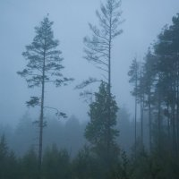 Утро туманное :: Виктор Гузеев
