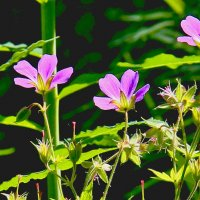 Весенние цветы :: Александр Садовский