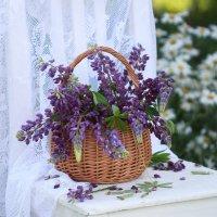 Во  саду  ли,  в  огороде!... :: Наталья Казанцева