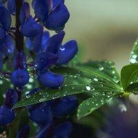 Чем сильнее дождь тем светлей будет солнце... :: liudmila drake