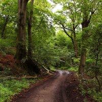 Вдоль по лесной дороге :: Alexander