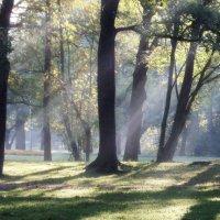 Утро в парке :: Юрий Цыплятников