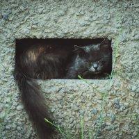 Коты - ну очень компактные существа :: Маргарита Б.