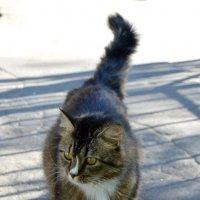 Кот ,который гуляет сам по себе. :: Наталья Малышева