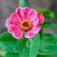 Цветы :: Анастасия Колмакова