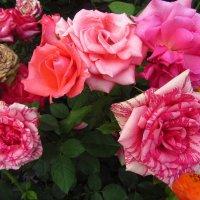 Очень разные розы :: Андрей Лукьянов