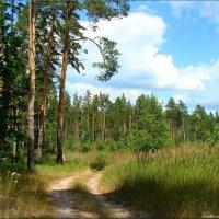 А за лесом лазурное небо... :: °•●Елена●•° Аникина♀