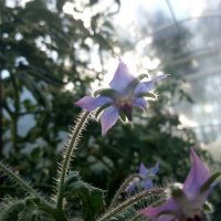 цветок :: Nadya cat
