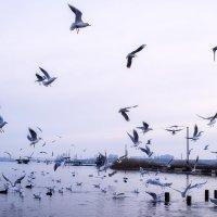 Чайки. :: ALLA Melnik