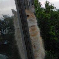 Кто не спрятался ,я не виноват... :: Татьяна Новикова