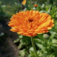 цветы :: Nadya cat