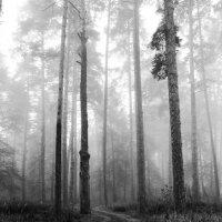 Туманный  лес... :: Валерия  Полещикова
