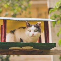 Кот в кормушке) :: Victoria N.