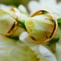 кольца :: Юлия Фотограф