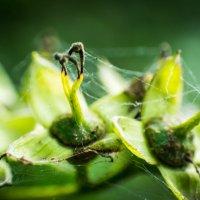 Лето, зелень, паутина.... Вот это супер) :: Артем