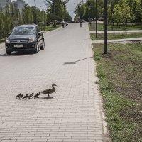 Ребята, за мной! :: Борис Гольдберг