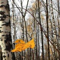 Сорвавшийся  лист..... :: Валерия  Полещикова