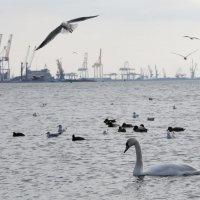 Лебеди на переправе :: Мария Ганджа