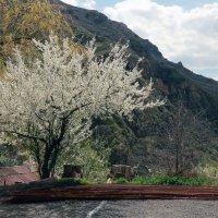 апрельское цветение :: Лидия кутузова